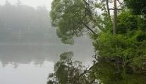 Foggy Maine
