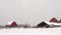 Wawekus Hill Farm