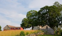 Connecticut Farm